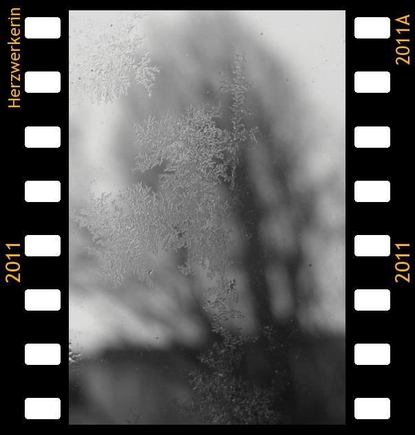Eiskristalle an der Autoscheibe, Hintergrund ein Baum der verschwommen ist