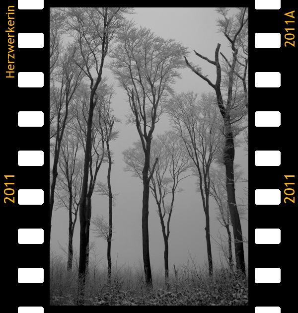In Nebel und Eis versunkener Wald, schwaz-weiß Aufnahme