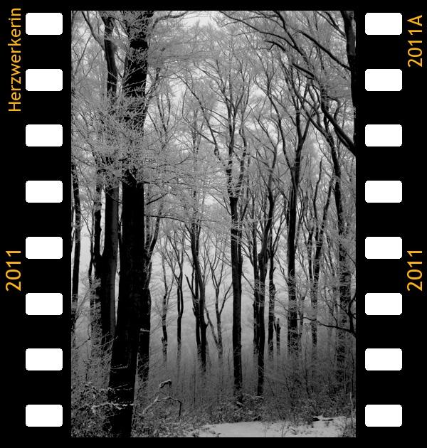 Wald, viele schwarze Stämme, rundherum alles weiß, in der Ferne ist ein weiterer Wald schwach erkennbar