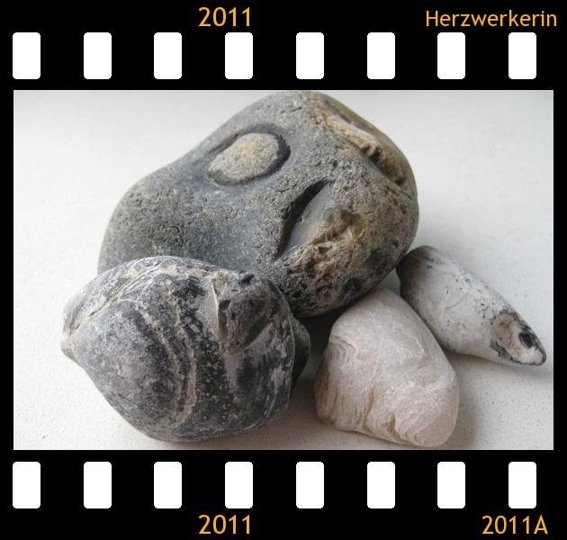 einige versteinerte Muscheln die ich gefunden habe